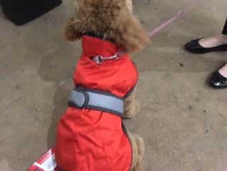 Designer dog jackets back in stock