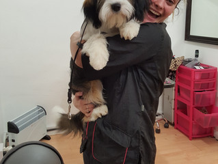 Puppy Pippi!