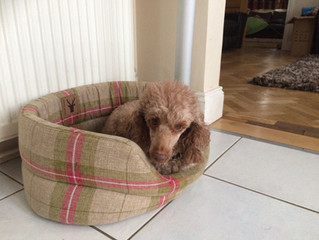 Have you treated your Spoilt Rotten dog to a new designer comfy bed?