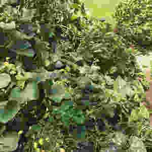 """Nachhaltigkeit, Permakultur, biologischer Anbau, ein wichtiger Umweltbeitrag von unserer Geschäftsführerin und Gründerin von Passionate Digital, Susanne Wagner: """"Ich genieße nicht nur die Gartenarbeit. Vielmehr werde ich dadurch immer wieder daran erinnert, dass wir  alle einen Beitrag für eine bessere Umwelt leisten können: Biologisch anbauen, ein Heim für Insekten und Vögel schaffen und gleichzeitig den nachfolgenden Generationen wichtige Kompetenzen vermitteln."""" Lesen Sie mehr in unserem Blog-Artikel: Von Passionate Digital W78 GesmbH, Ihrer professionellen Beratung für Management / Digitalisierung / Einkauf bzw. Beschaffung / SAP Ariba"""