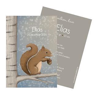 #geboortekaartje #eekhoorn #zwanger #zomer #lente #birdcard #geboortekaartjeopmaat #birthannouncement #illustrator #Diest #elias
