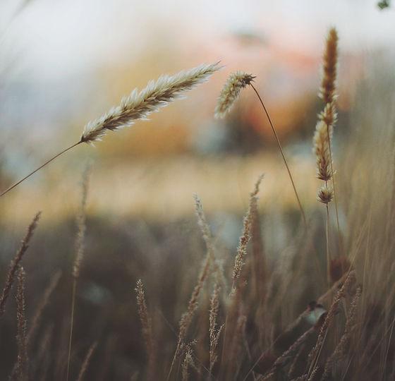 grass-336524_960_720.jpg