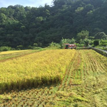 安星農場一起種菜灑水整地活動