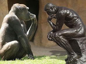 Thinker_Gorilla.jpg