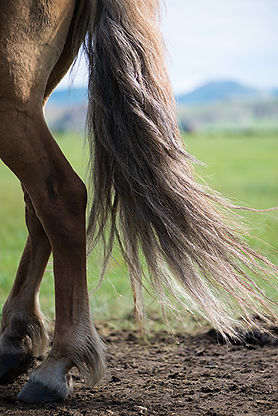 Mongolie - Cheval dans la steppe / Mongolia - Horse in the steppe