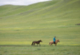 Mongolie - Cavalier nomade dans la steppe / Mongolia - Nomadic rider in the steppe