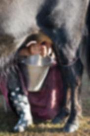Mongolie - Traite des Yacks / Mongolia - Yack Milking
