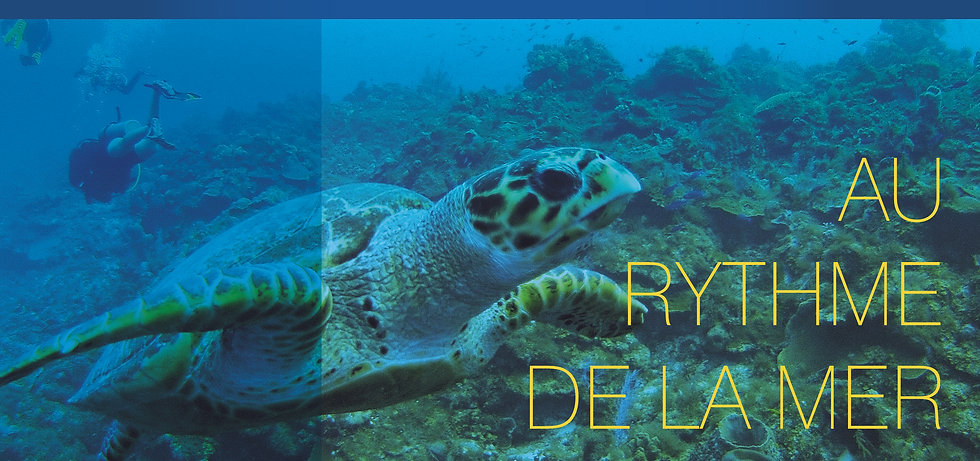 Blue Odyssey, Plongée, îles turquoise, charter, bateau, excursion, voyage, escapade, caïcos, iguane, apnée, charter privé, expédition, poisson, tortue, plongée sous-marine, capitaine, îles, plage, sable