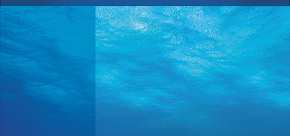 Blue Odyssey, Plongée, îles turquoise, charter, bateau, excursion, voyage, escapade, poisson