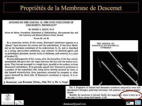 Greffe de cornée paris : Propriété de la membrane de Descemet