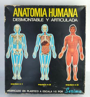 Juego de Anatomía Humana desmontable y articulada Estaca 1:5 Sezima