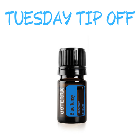 THIS WEEK'S TUESDAY TIP OFF IS ... BLUE TANSY!!!