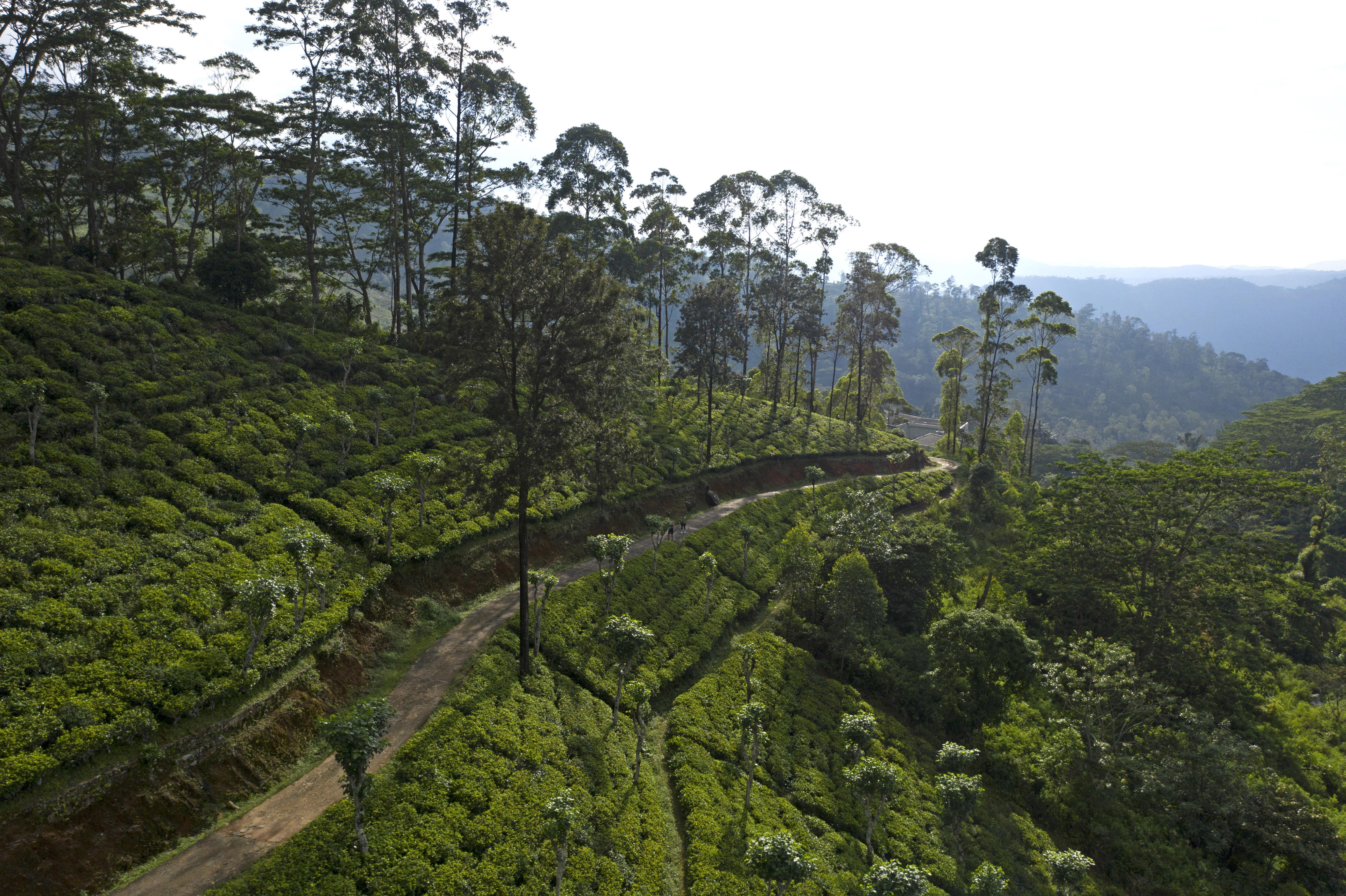 Teaplantation_Hunas Falls