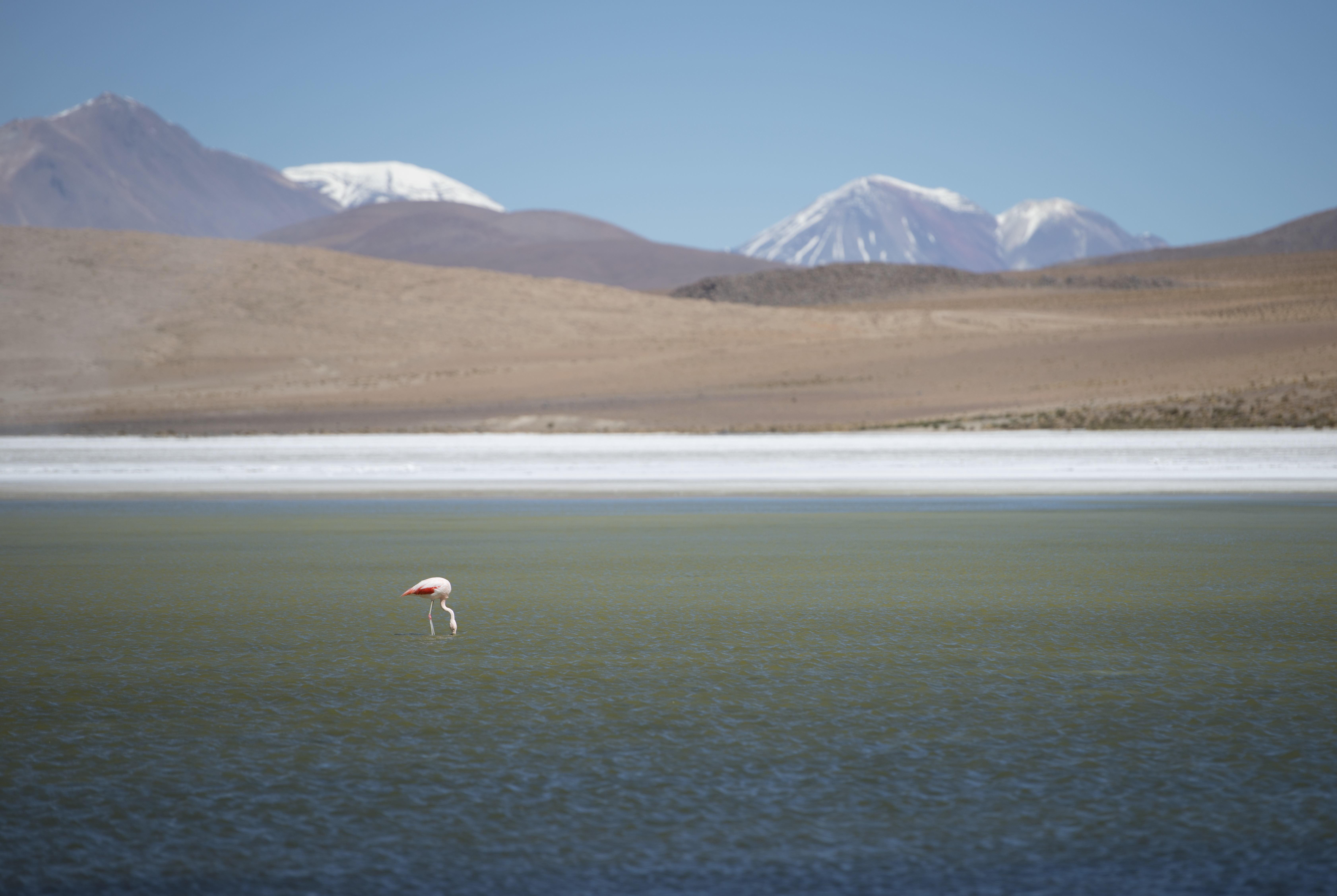 Flamingo_01