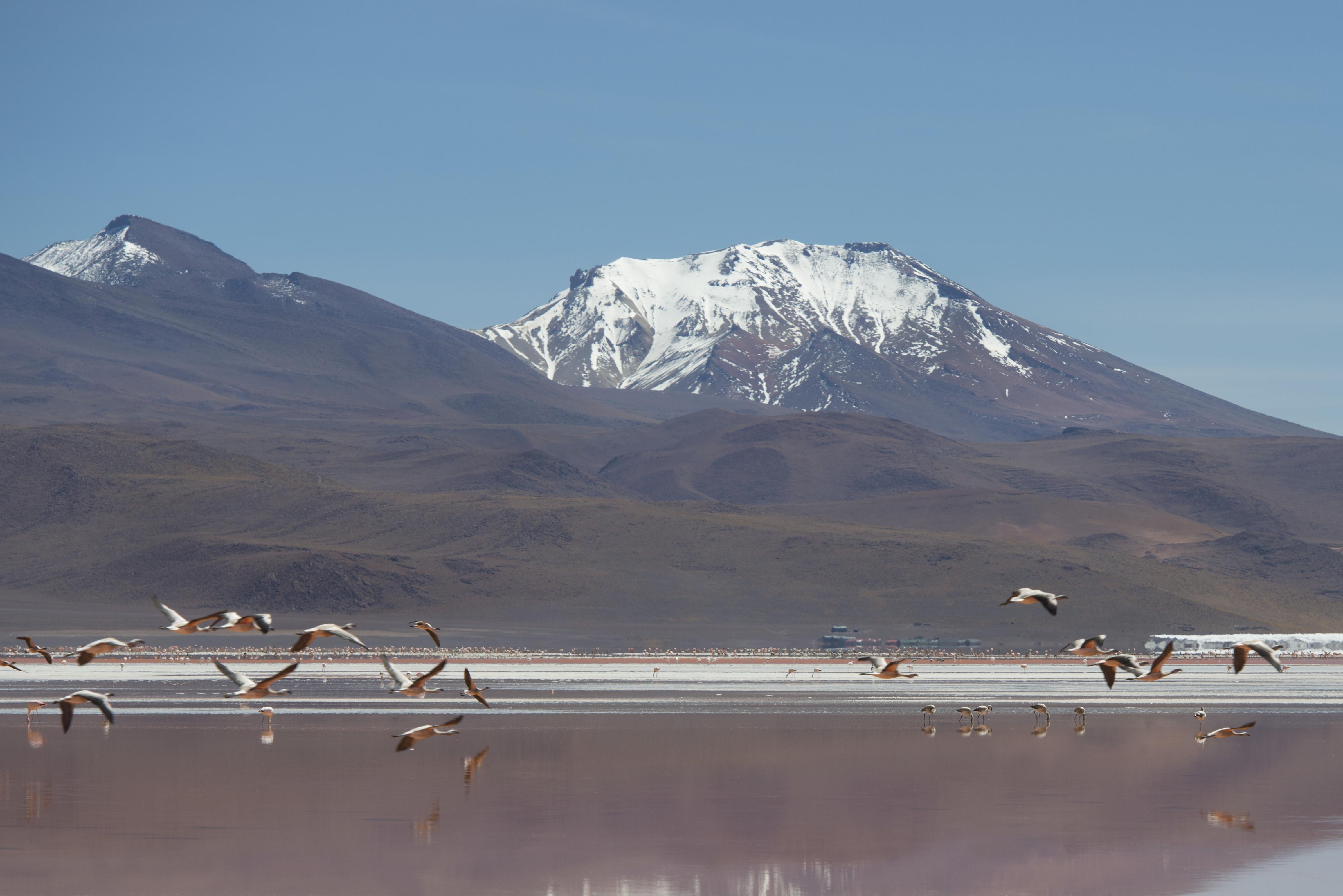 Laguna Colorada_9