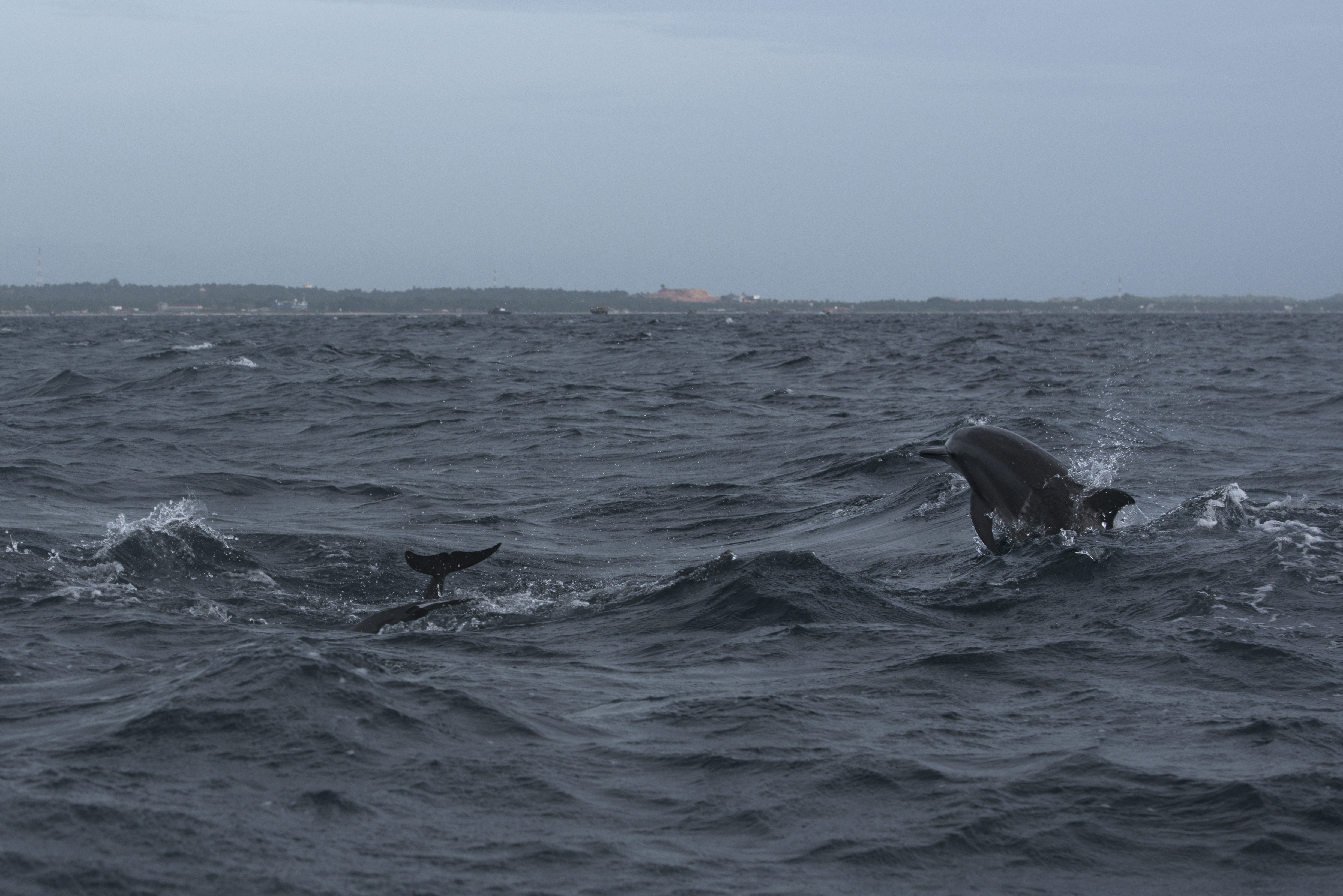 Dolphins_3