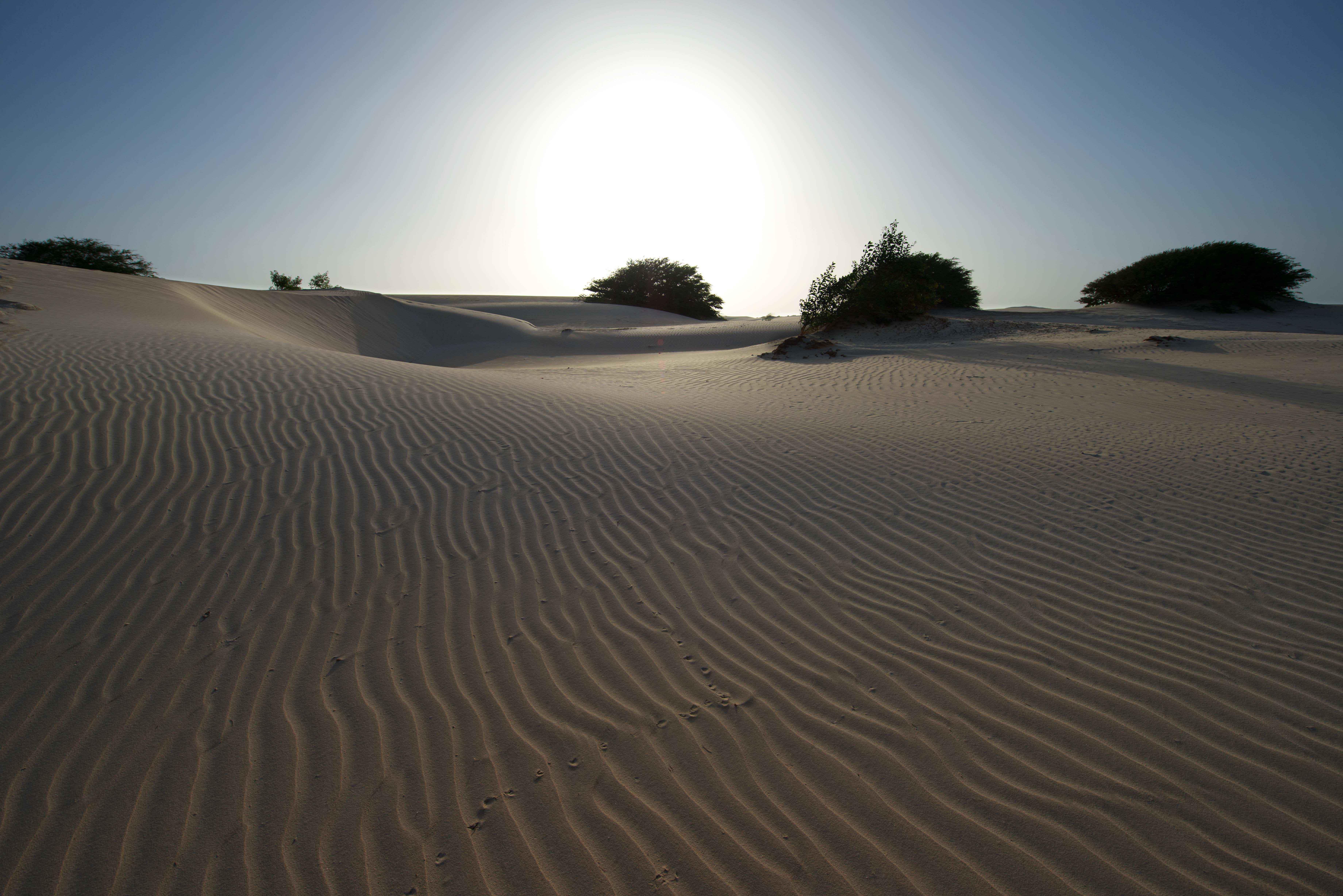 Ørkensol