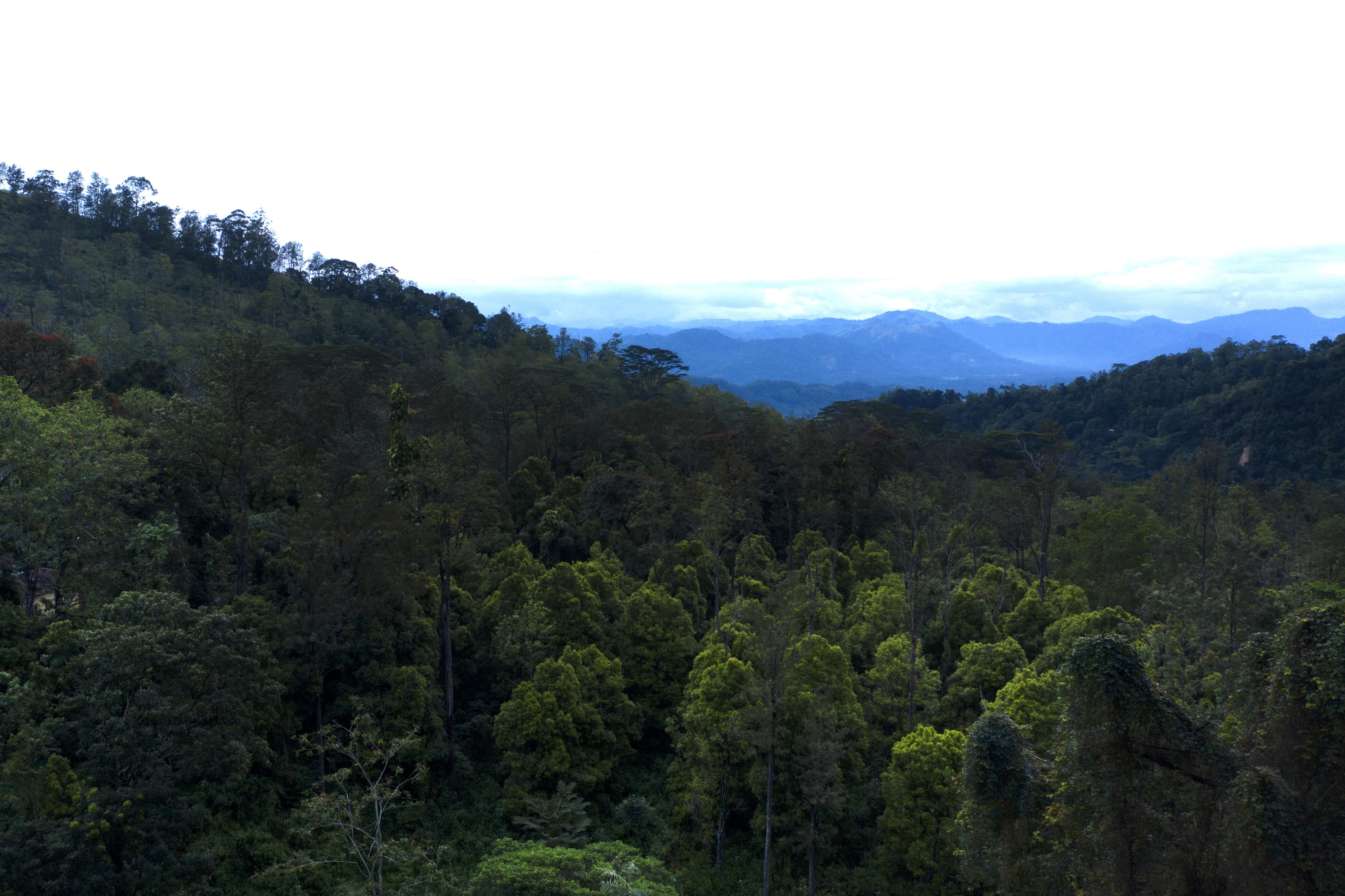 Hunnas Falls Landscape