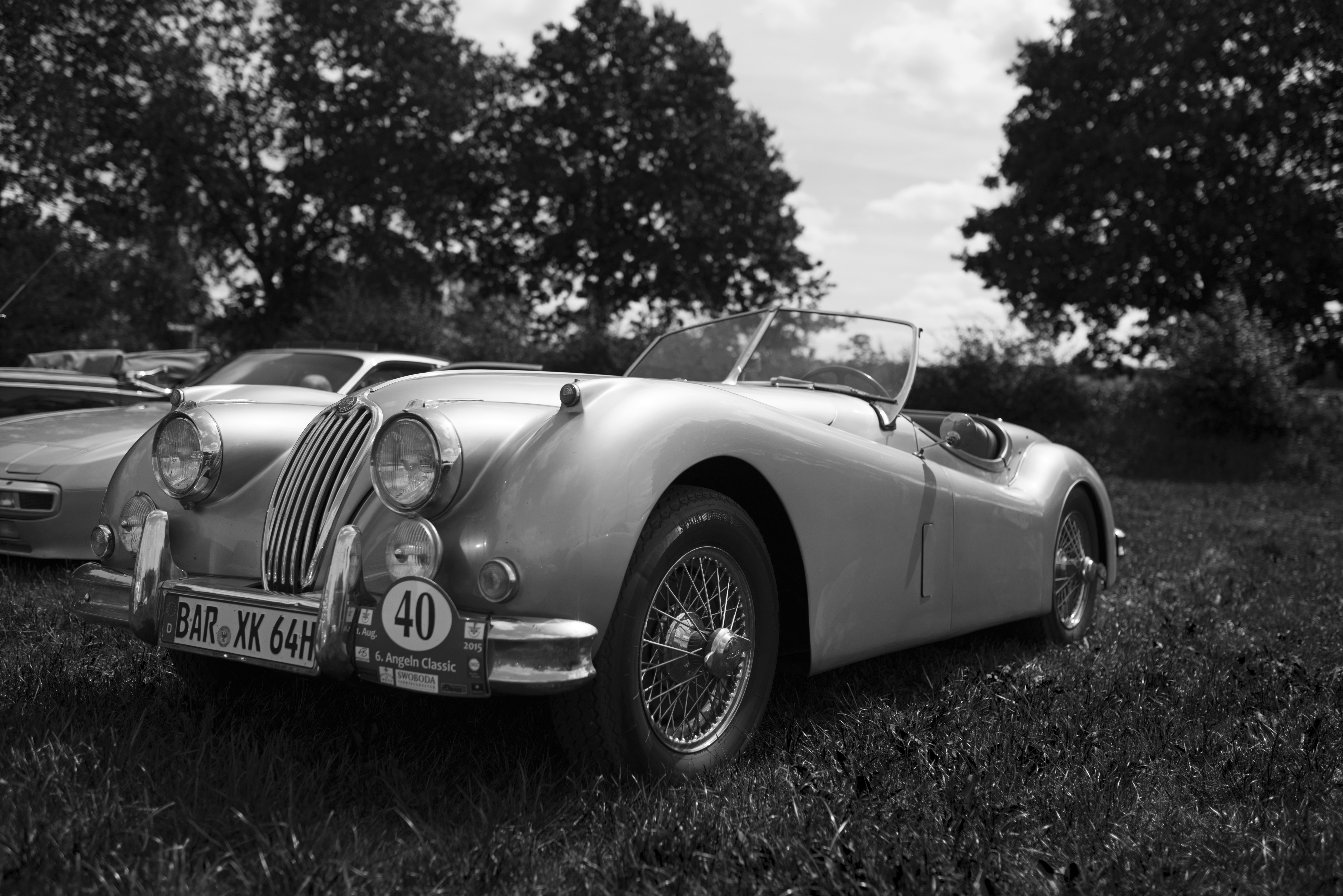 Jaguar_sh_3