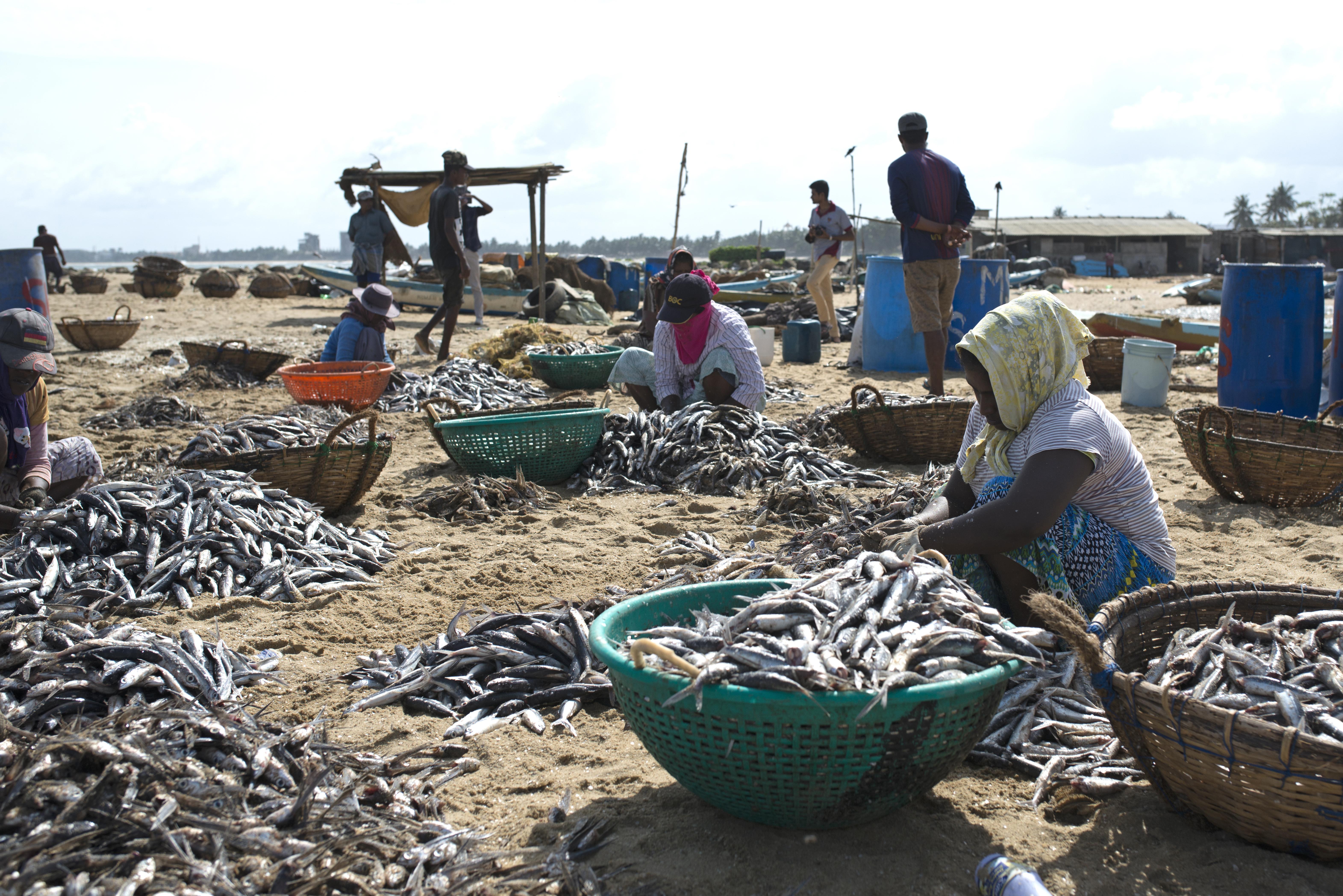 Negombo fish market_s