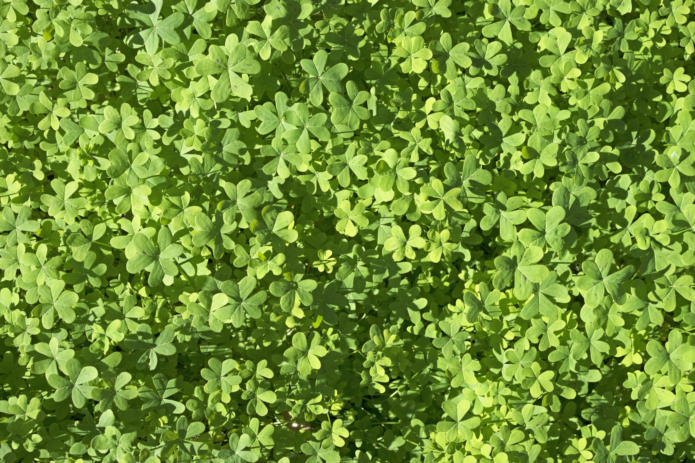 LaGomera_Green_Like_Spring