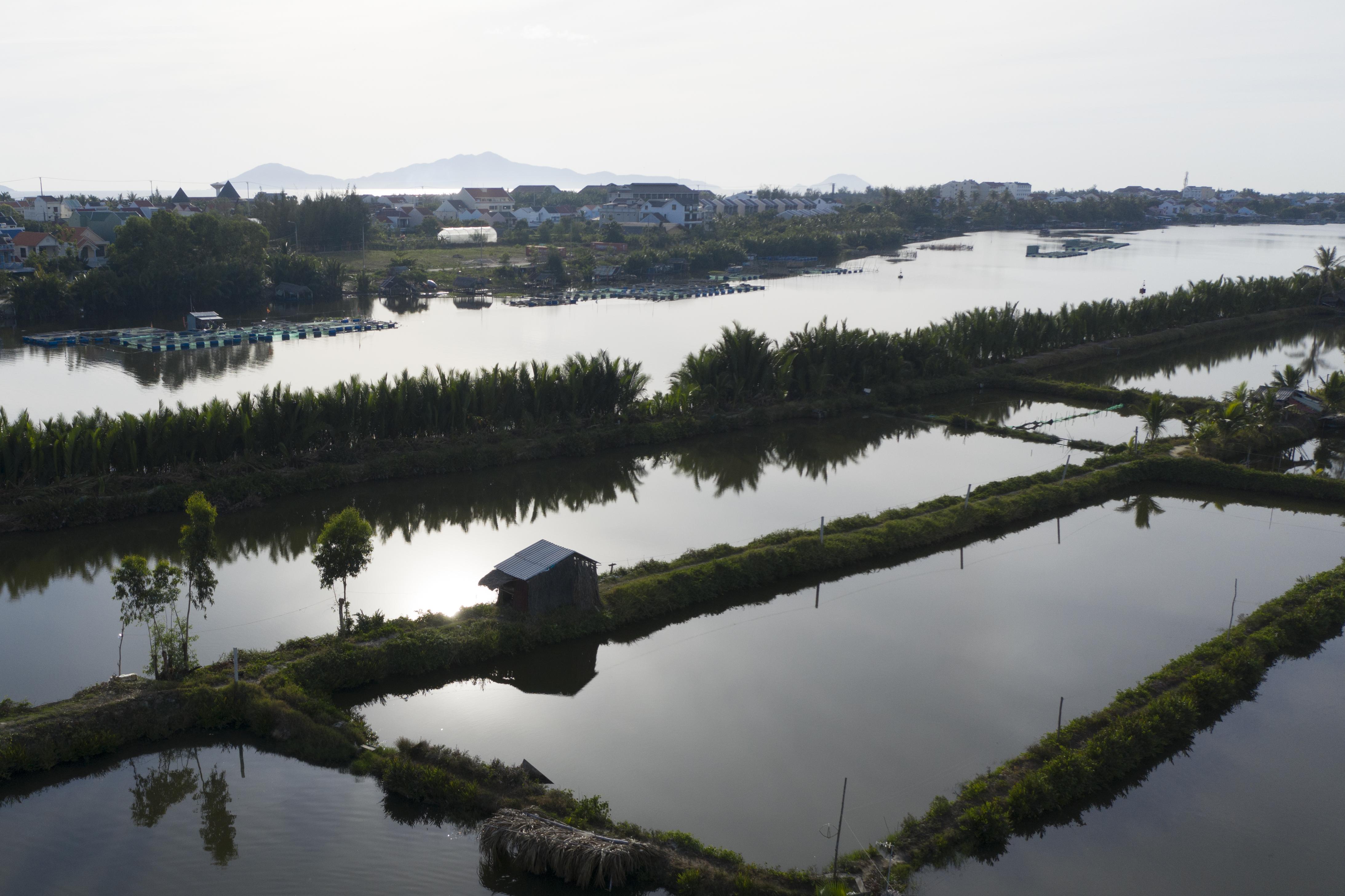 Cam An_Shrimp Farms