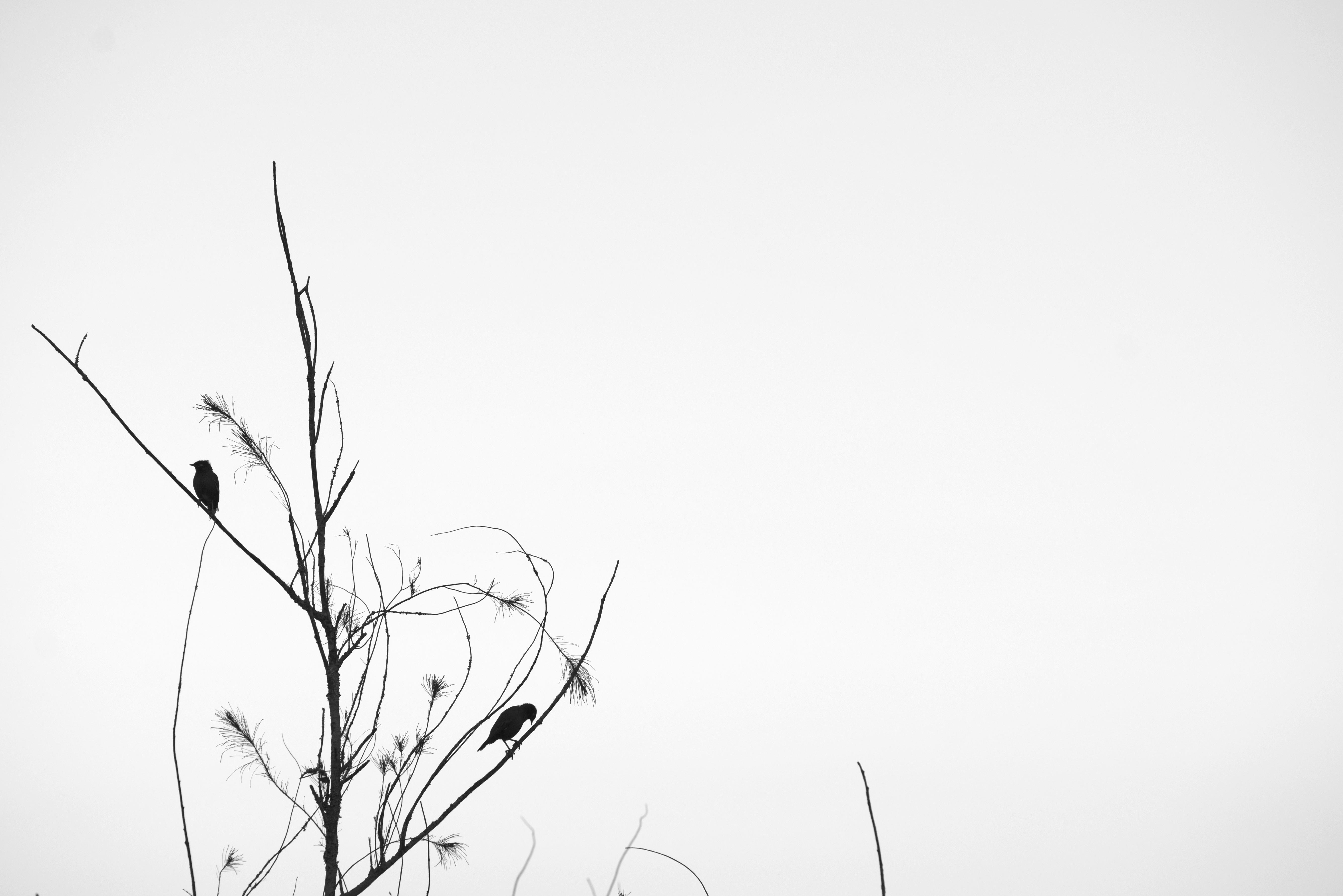 Bird silhuet