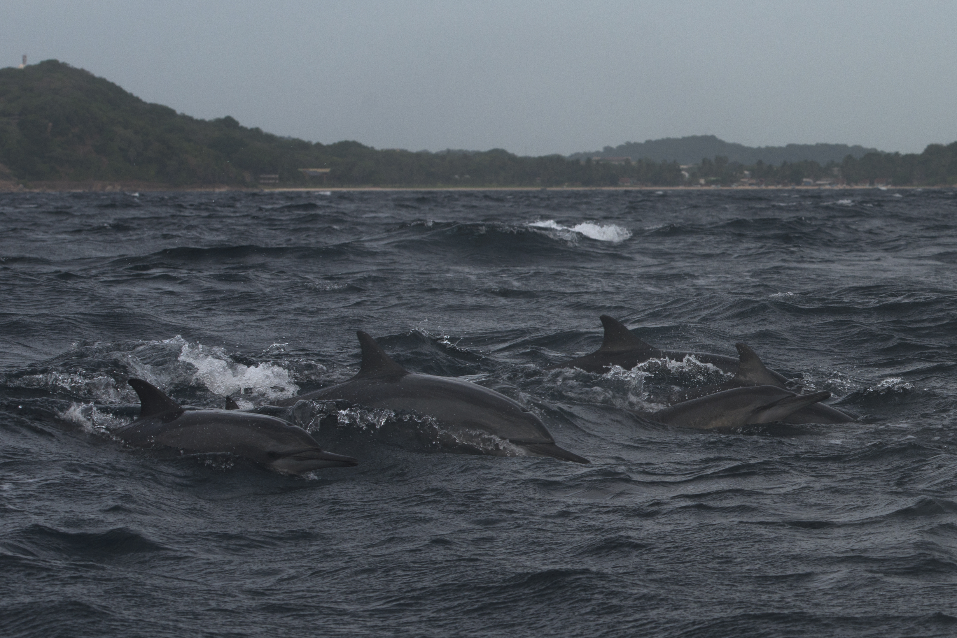 Dolphins_5