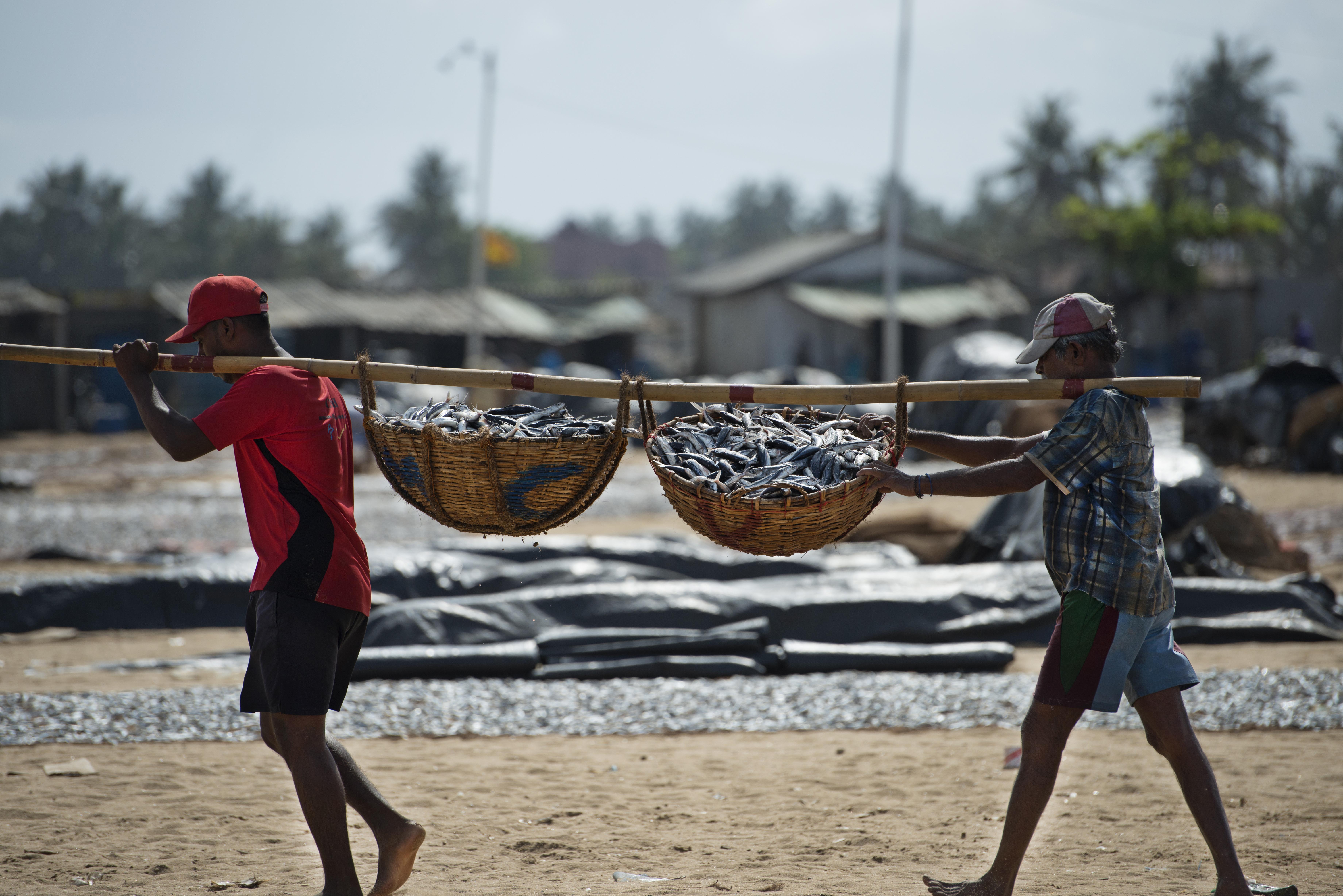 Negombo fish market 3_s