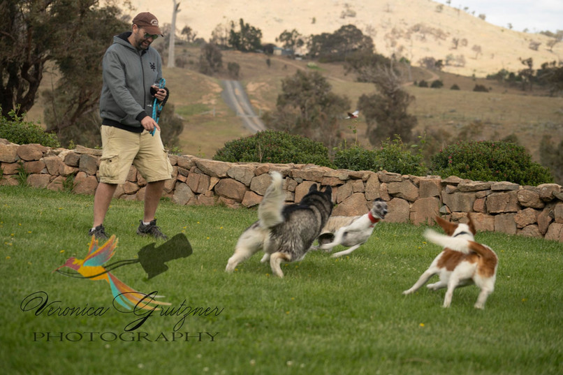 Doggy Day Out Wallaroo Wines Estate Canb