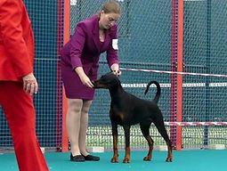 Laura Nicholas Dog Handler