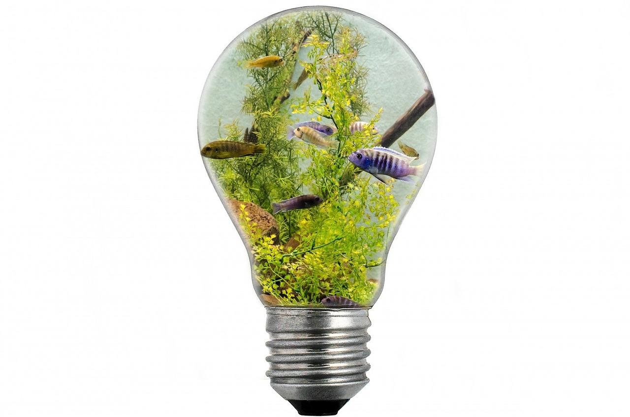bulb-313699_1280