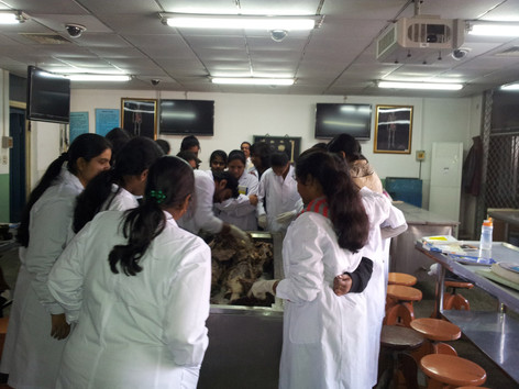 Practical classes in Clinically Applied