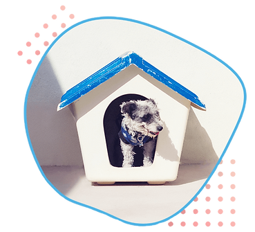 dog house (1).png