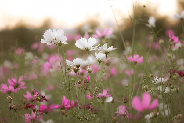 Zomerse bloemen.jpg