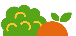 Orange_Broc_Fruit.png