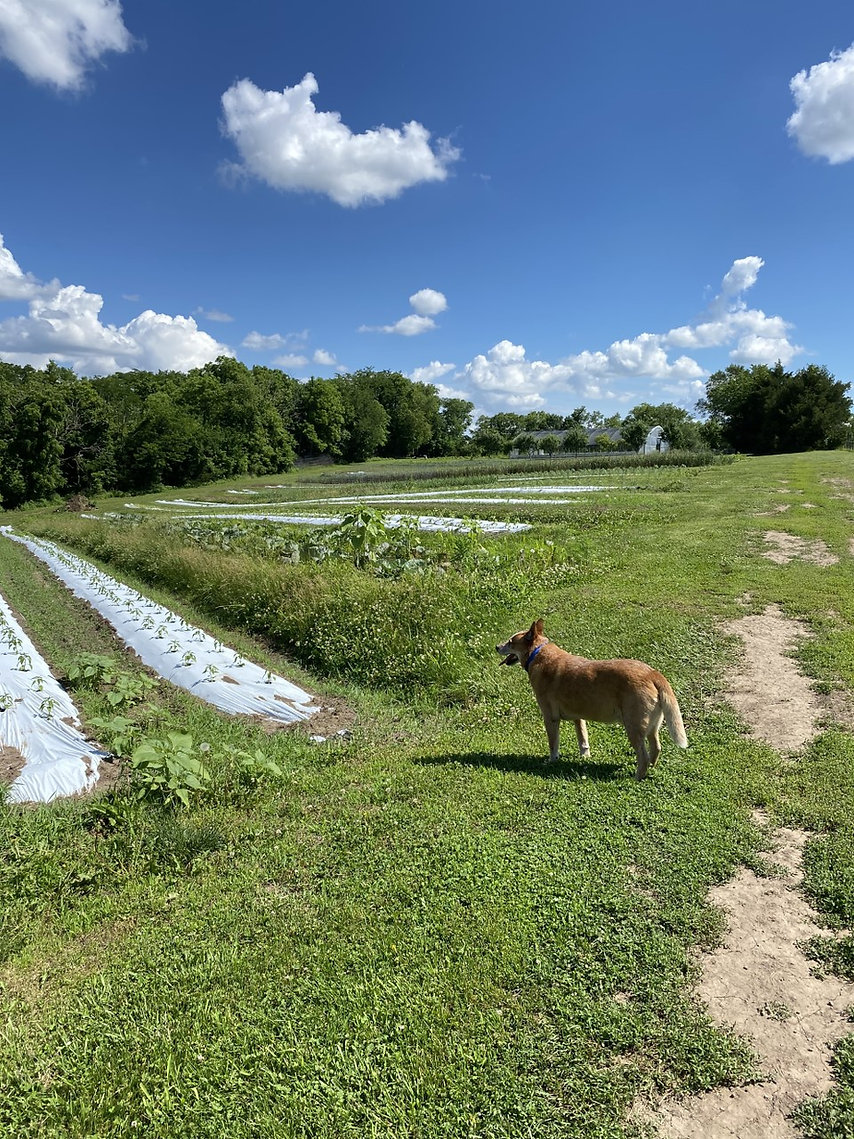 Crums Farm 2.jpg