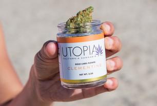 The Clean Cannabis Movement
