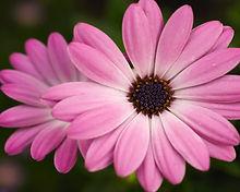 Funeral flowers, Market Harborough,