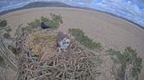 Birdies, Eagles and Ospreys!