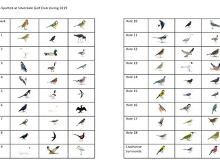 Birds and Birdies