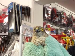 Strange visitor to our Proshop