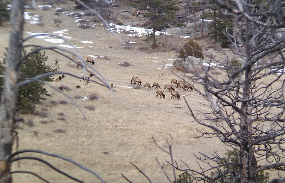 WOLF Sanctuary threatened wildlife