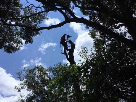 真夏のツリークライミング