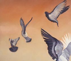 Four Grey Pigeons