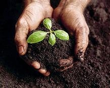 Composting Plant.jpg