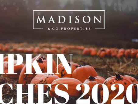 Pumpkin Patches near Denver - Madison & Company Properties
