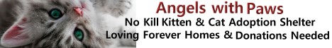 Angels with paws, no kill cat and kitten adoptin shelter in Lakewood, colorado