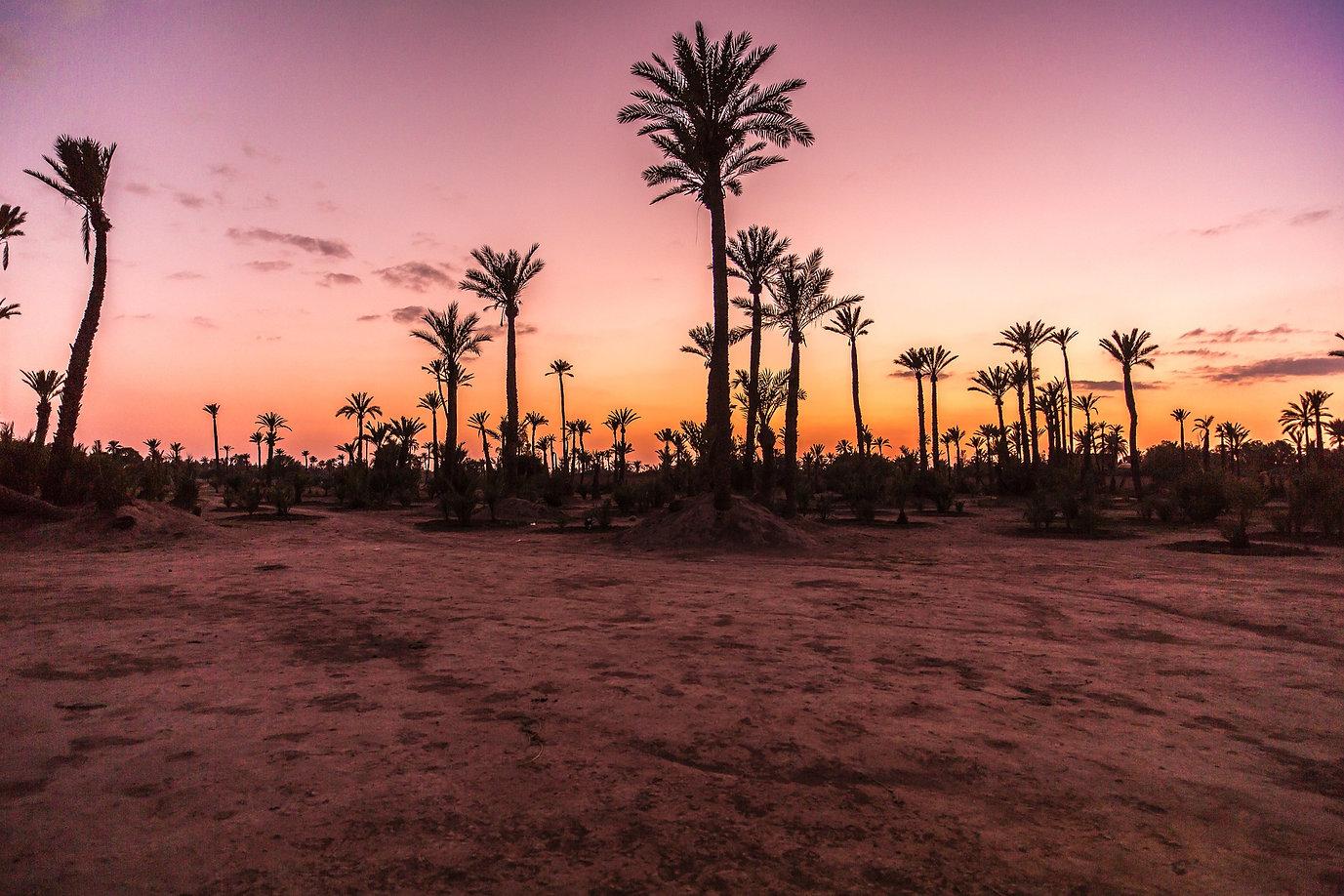 image_palmier_tombée_de_la_nuit_marrake