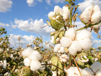 8 Reasons to Buy Products Made From Organic Cotton